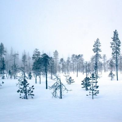 misty_winter_forest_by_lightfantastic-d4vksw0